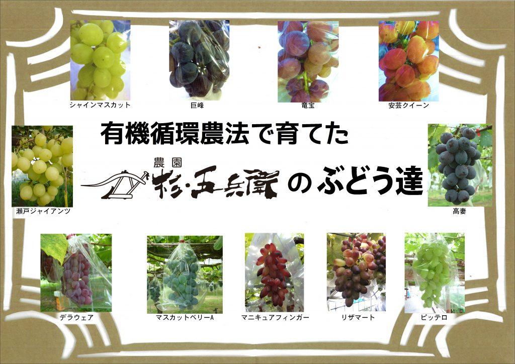 ぶどうの季節になりました【9月】